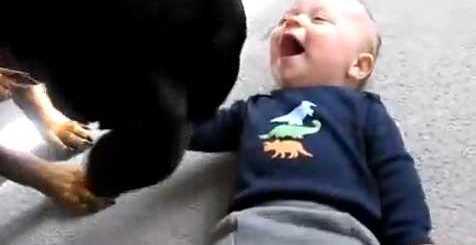 rottweiller e bebe