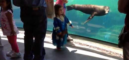 menina e leao marinho