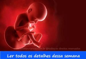 A formação do bebê semana a semana - 29 semanas de gravidez - Acompanhe sua gravidez semana a semana