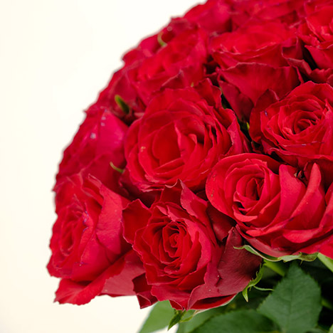 50 roses rouges