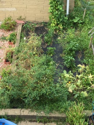 The whole garden I took last week.