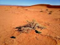 Hinterlassenschaften im Wüsten-Sand.
