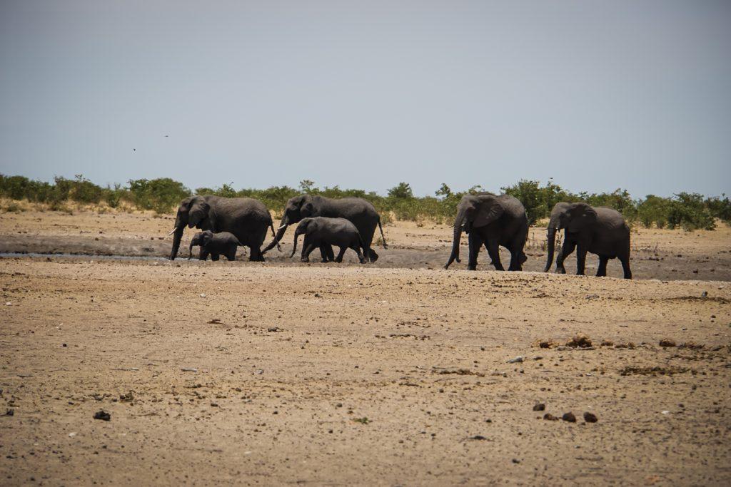Elefanten unterwegs