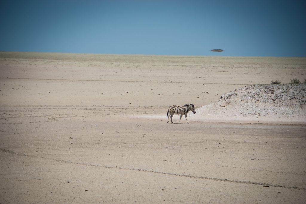 Zebra auf Etoscha-Pfanne