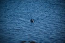 Ein einsamer Seehund winkt