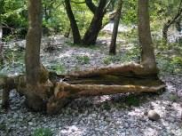 Baum-Tränke