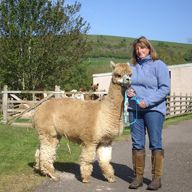 barbara with chaska the alpaca