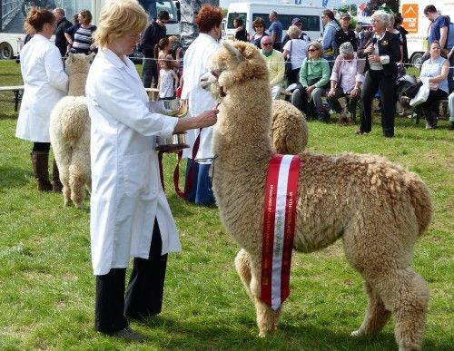 Beck Brow Alpacas