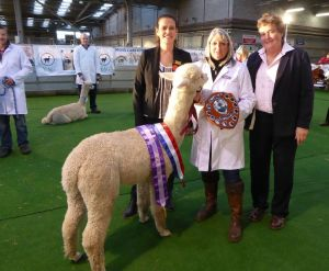 Beck Brow Mr Darcy (Explorer) 2015 Supreme Champion with judge Cathy Lloyd and apprentice Viv Darcy (no relation!)