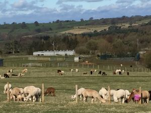 The view from one of the top paddocks at Beck Brow