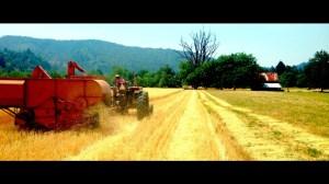 Camp Grant Harvest