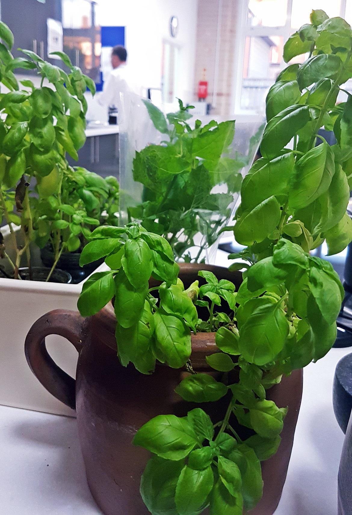 Fresh herbs - Leeds Cookery School review by BeckyBecky Blogs