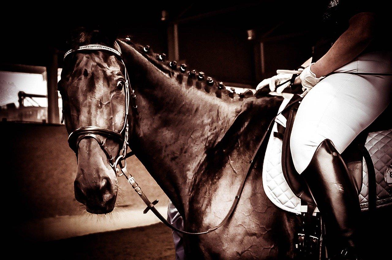 cavallo del riviera horses a san giovanni in marignano