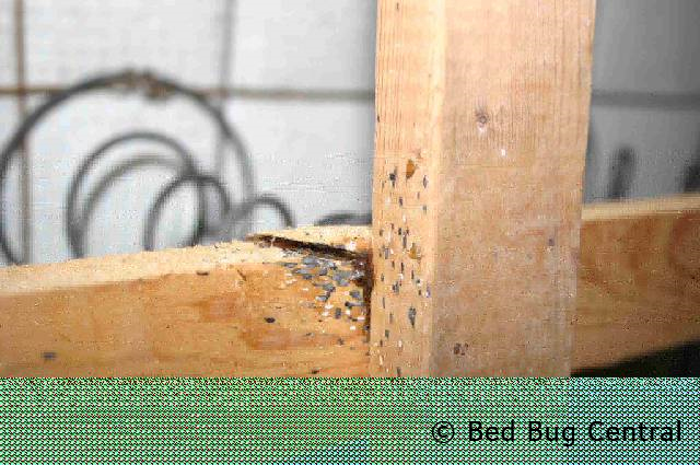 It Is Difficult And Time Consuming To Inspect Deal With Bugs Eggs Inside Of Box Springs The Edges Mattresses