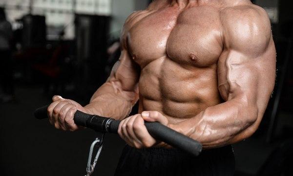 musculation et métabolisme