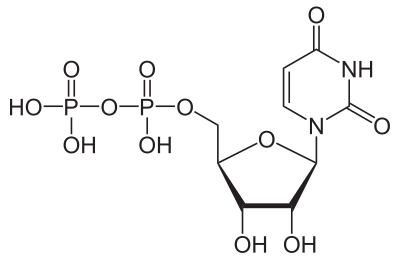 uridine nutrition