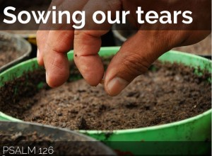 Sowing Our Tears