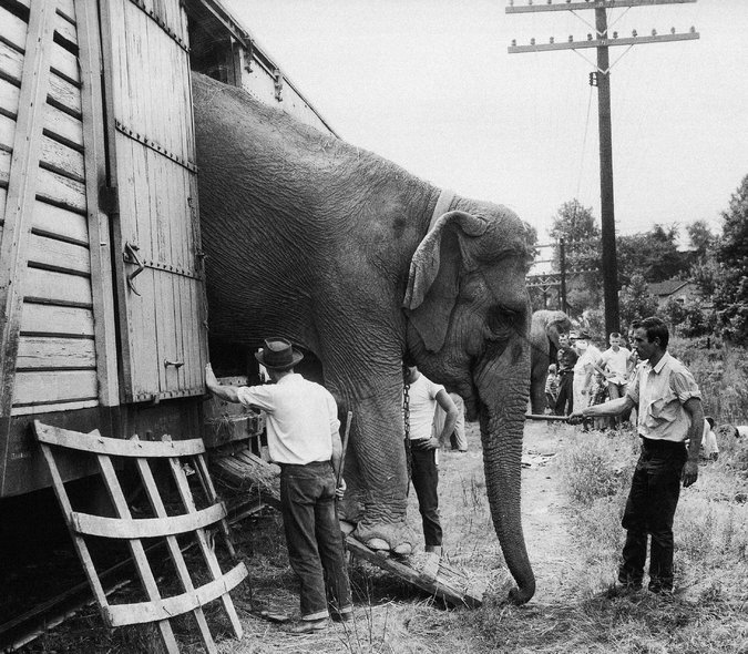Homes Make Do How Their Elephants