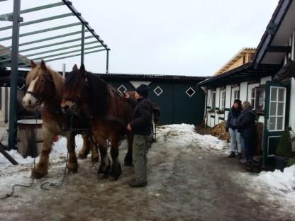Actie in de sneeuw (1)