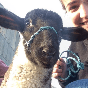 My First Year (and a half) in Young Farmers by Lex Rutterford, Woburn