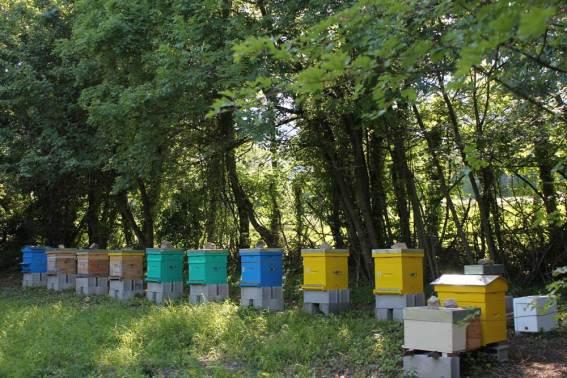 Rucher Bee Abeille
