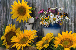Bienenfreundliche Blumen