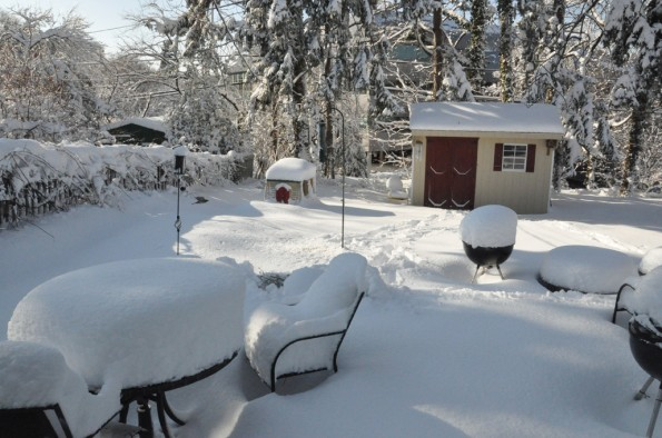 back yard after a snow storm