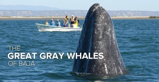 great-grab-whales-nathab