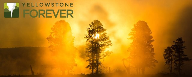 yellowstone-forever