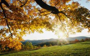 Autumn Wallpapers (18)