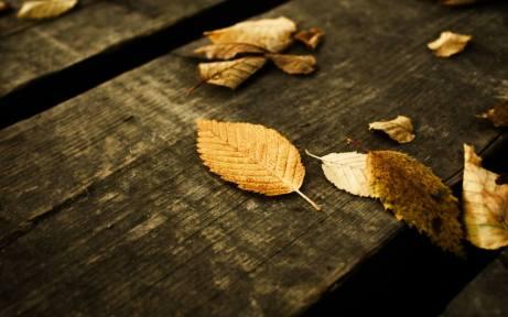 Autumn Wallpapers (35)