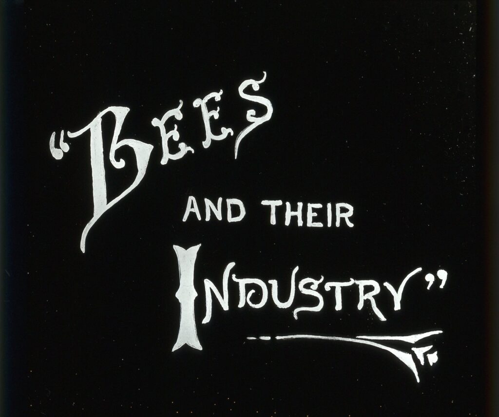 Bees and their industry - from a magic lantern slide #BeehiveYourself, #WantageHoney #OldBeekeeping, beehive yourself.co.uk