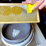 Uncapping a frame of honey by hand and using a uncapping fork. #BeehiveYourself, #WantageHoney, #Wantage,