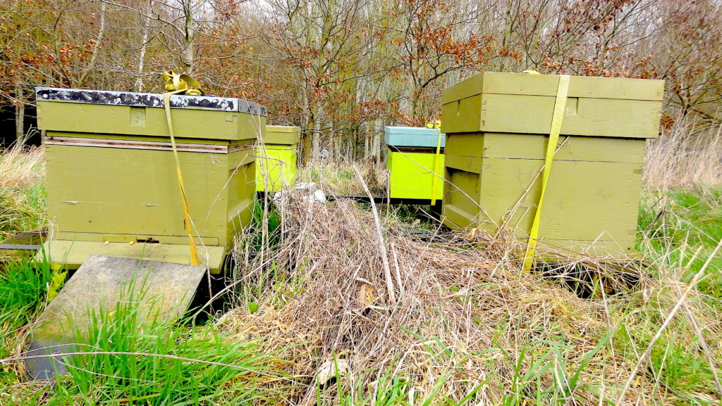 Four national hives with a backdrop of trees during February 2019. The apiary is at Elms Farm, Wantage. #BeehiveYourself, #WantageHoney, #BeeHives, Beehive Yourself, Wantage Honey,