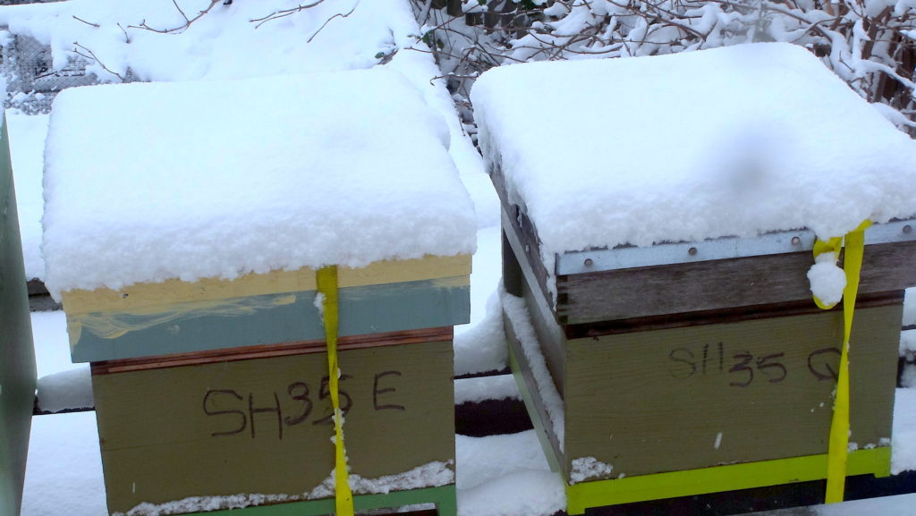 Snow on my Rooftop Hives in Wantage. The snow must be 3 inches deep. #BeehiveYourself, #WantageHoney, #RooftopHives, Beehive Yourself, Wantage Honey, Rooftop Hives