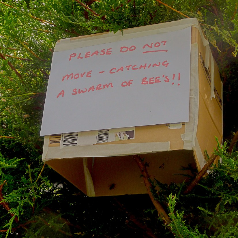 Swarm in a Box - Please do no move - catching a swarm of bees. #BeehiveYourself, #WantageHoney, #Swarm, Beehive Yourself, Wantage Honey