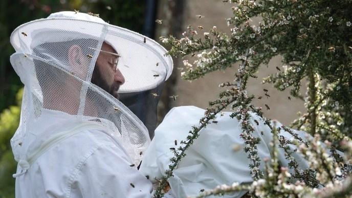 Photo of hiving a bee swarm / Copyright beelistener.co.uk