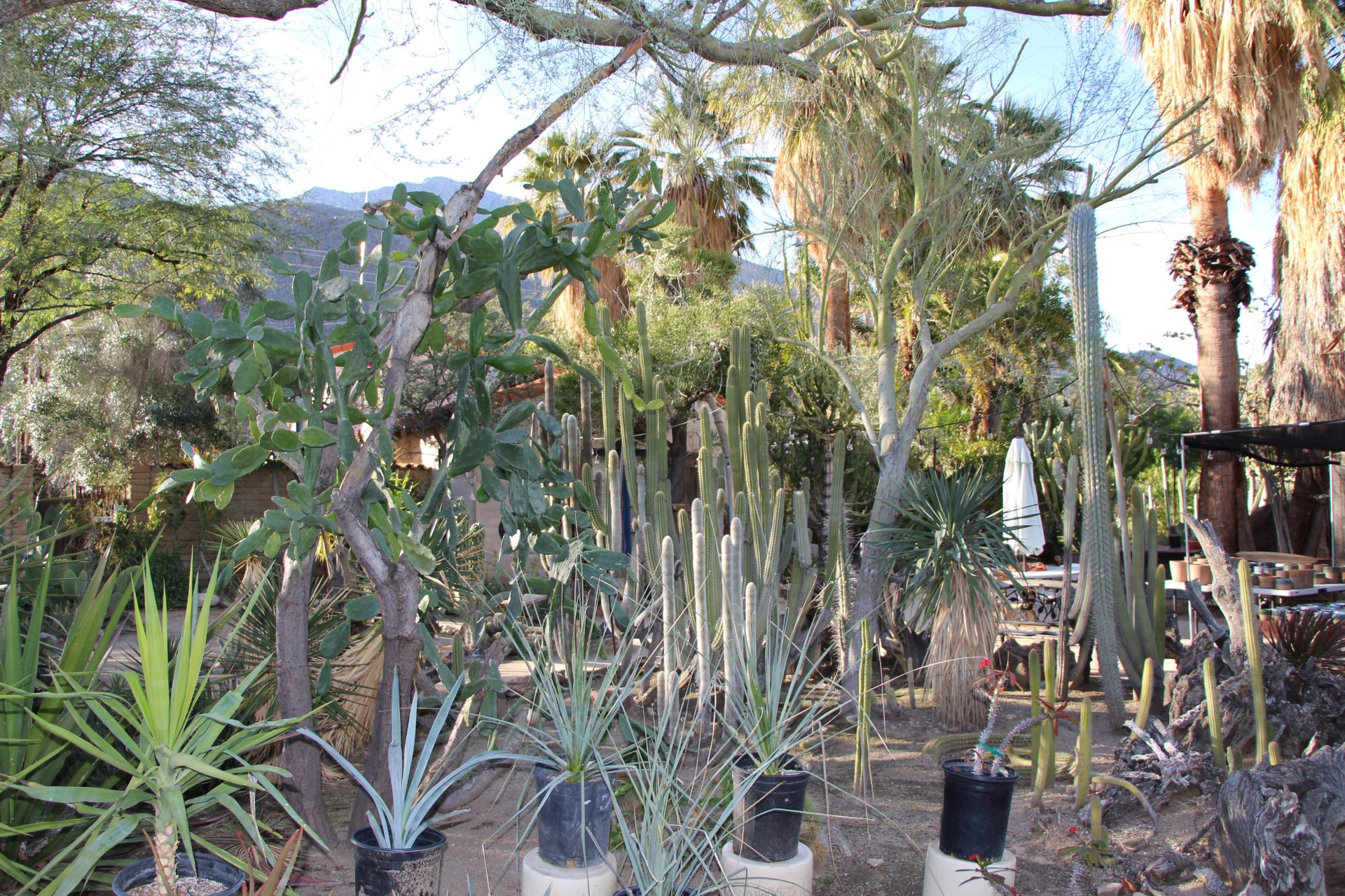 Located Just 10 Minutes Down The Road From The Indian Canyons, Is The  Worldu0027s First Cactarium, The Moorten Botanical Gardens And Cactarium.