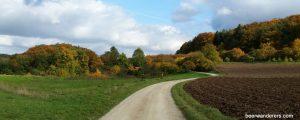 foliage empty field