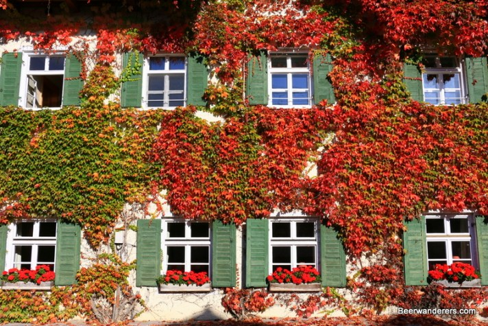foliage on building