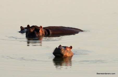 hippos river