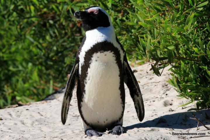 penguin eyes closed
