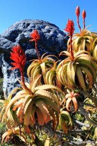 wildflowers on mountain