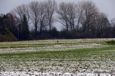 hawk in distance