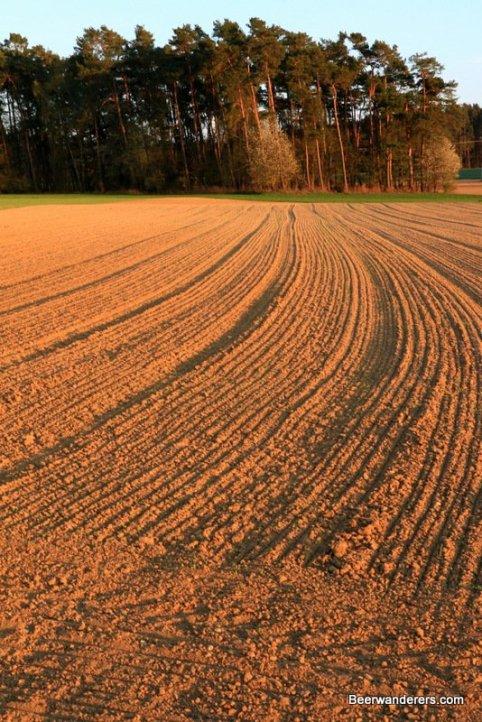 field in late sunlight