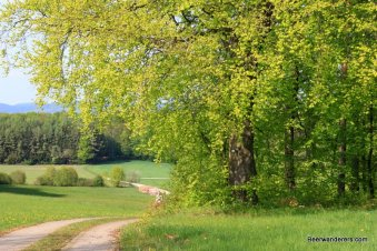 farm road and big tree