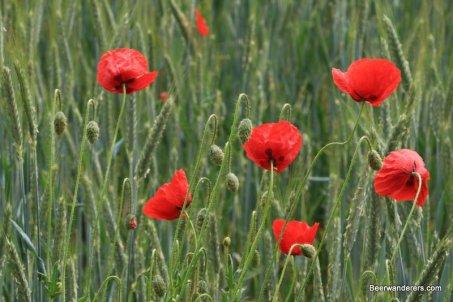 buttenheim seftenberger hike flowers