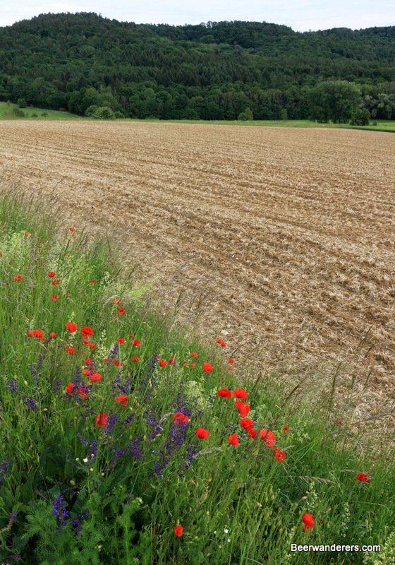 flowers along a field