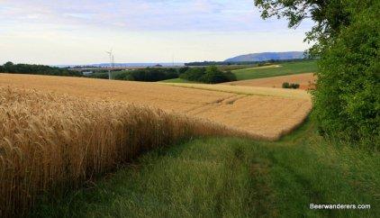 trail along field of grain