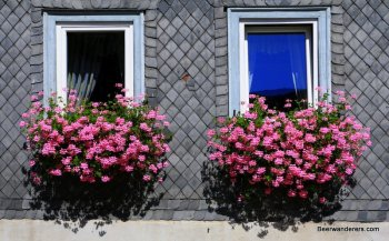 flowers on windows